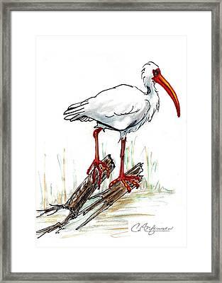 Ibis On A Perch Framed Print