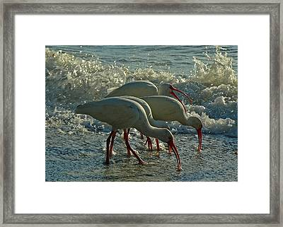 Ibises Framed Print by Juergen Roth
