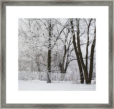 Ice Anyone Framed Print
