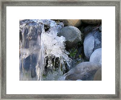 Ice Blossom Framed Print by Mel Crist