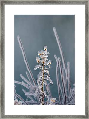 Ice-coated Plants.  Mist From Shoshone Framed Print by Darlyne A. Murawski