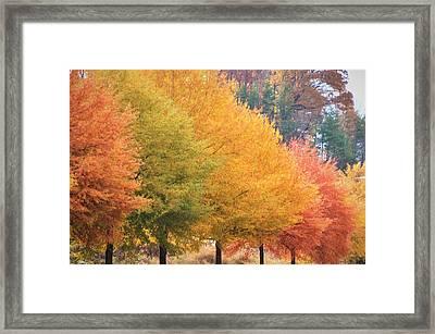 October Trees Framed Print