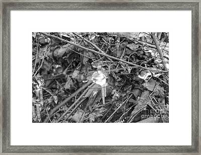 Ice Crystal In January Framed Print