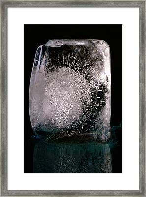 Ice Cube Framed Print by Rico Besserdich