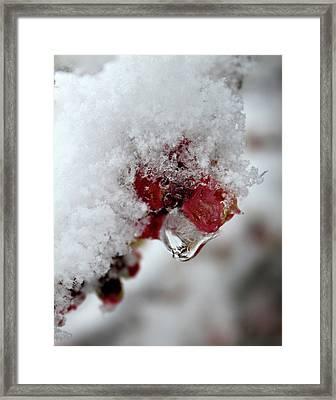 Ice Drip Framed Print