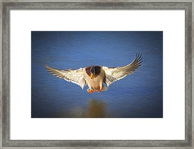Ice Landing Framed Print by Donna Kennedy