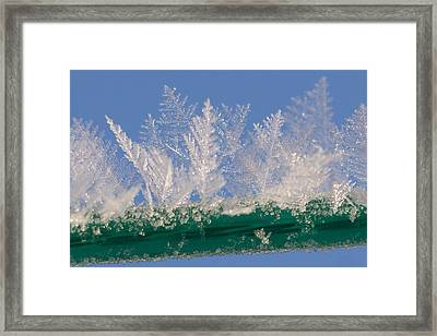 Ice On A Line Framed Print by Carol Lynch