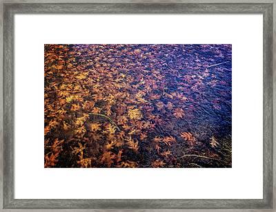 Ice On Oak Leaves Framed Print