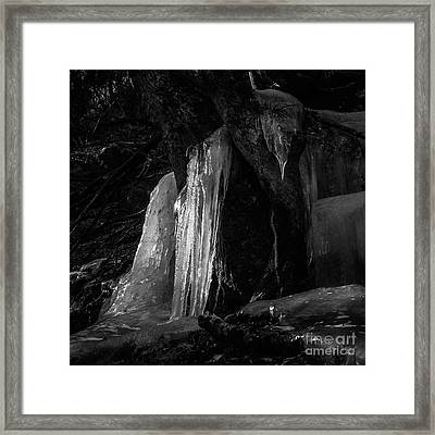Icicle Of The Forest Framed Print