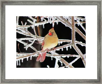 Ice Princess Framed Print