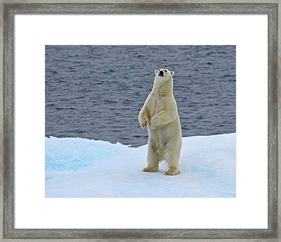 Ice Stand Framed Print