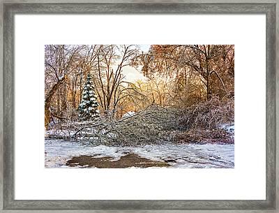 Ice Storm...day 2 Framed Print by Steve Harrington