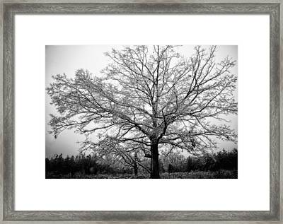 Ice Tree Framed Print