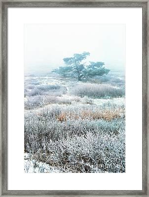 Ice Tree Shenandoah National Park Framed Print by Thomas R Fletcher