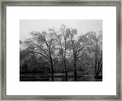 Ice Trees Framed Print by Audrey Venute