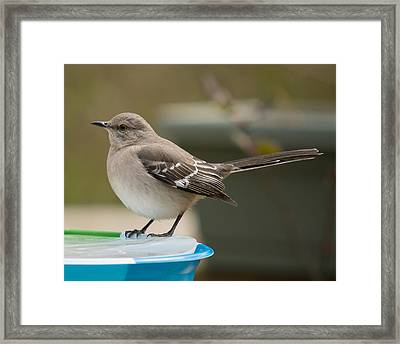 Ice Water Framed Print by Robert L Jackson