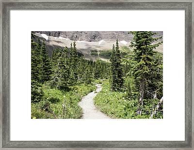 Iceberg Lake Trail Forest Framed Print