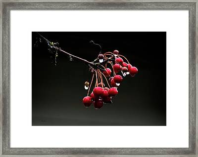 Iced Crab Apples Framed Print