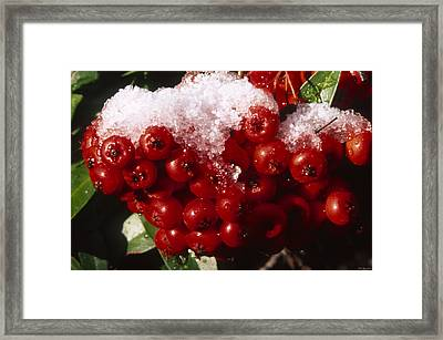 Iced Ruby Cluster - Tille Creek  Framed Print by Soli Deo Gloria Wilderness And Wildlife Photography