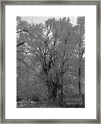 Iced Tree Framed Print
