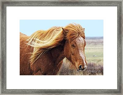 Iceland Horse In The Wind Framed Print by Angela Doelling AD DESIGN Photo and PhotoArt