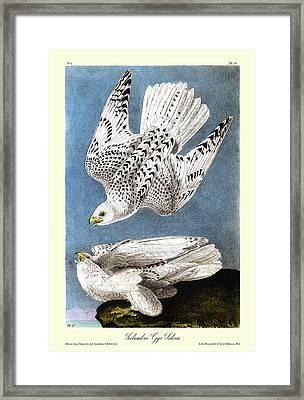 Iceland Or Gyr Falcon Audubon Birds Of America 1st Edition 1840 Royal Octavo Plate 19 Framed Print by Orchard Arts