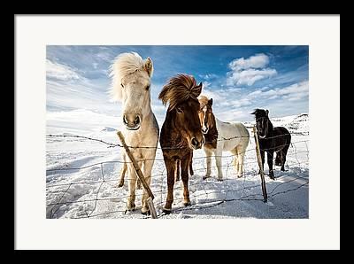 Snow Horses Framed Prints