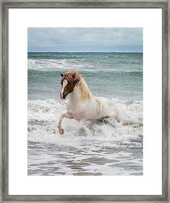 Icelandic Horse In The Sea, Longufjorur Framed Print by Panoramic Images