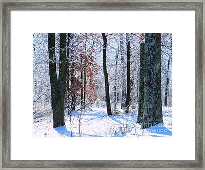 Icey Forest 1 Framed Print