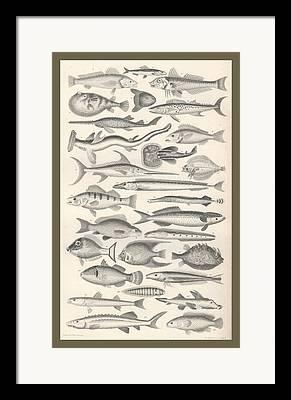 Schools Of Fish Drawings Framed Prints