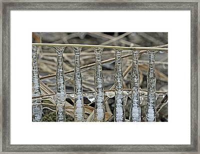 Framed Print featuring the photograph Icicles On A Stick by Glenn Gordon