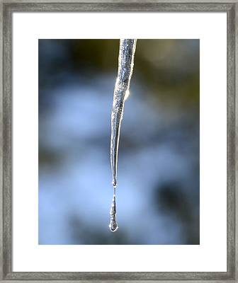 Icicles In Bloom Framed Print