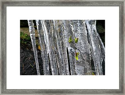 Framed Print featuring the photograph Icicles by Sharon Talson