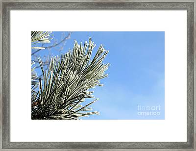 Framed Print featuring the photograph Icing On The Needles by Michal Boubin