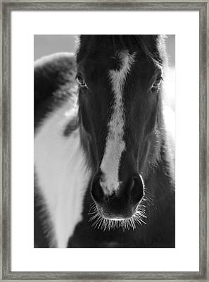 iContact Framed Print