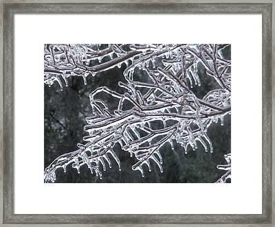 Icy Branch Framed Print by Jeanette Oberholtzer