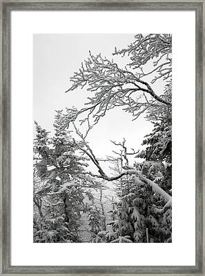 Icy Branches In The Adirondack Mountains Of New York Framed Print by Brendan Reals