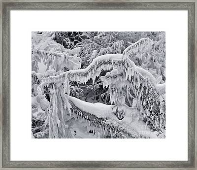 Icy Breath Of The Frost Dragon Framed Print by Royce Howland