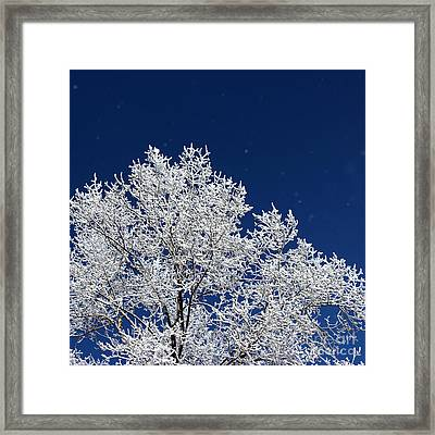 Icy Brilliance Framed Print