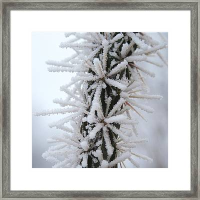 Icy Cactus Framed Print