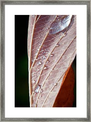 Icy Fall Morning Framed Print by Lisa Knechtel