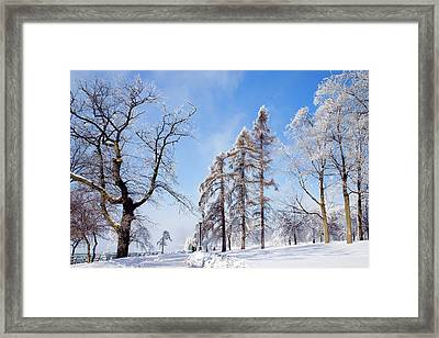 Icy Frosting Framed Print by Timothy McIntyre