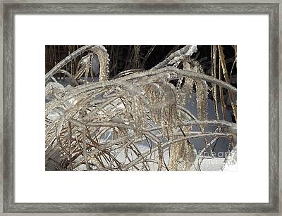 Icy Grass Framed Print