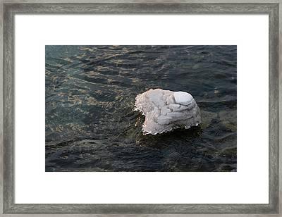 Icy Island - Drifting Solo On Silky Grays Framed Print