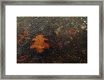 Icy Leaf Framed Print