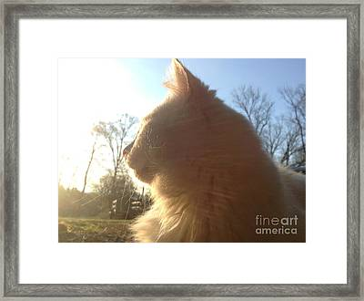Icy Framed Print by Mary Tron