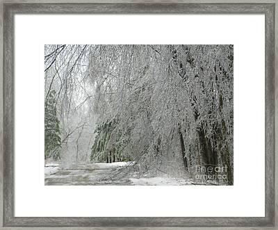 Icy Street Trees Framed Print