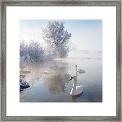 Icy Swan Lake Framed Print