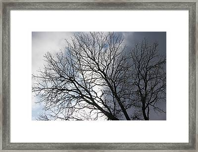 Icy Tree Framed Print by Dave Clark