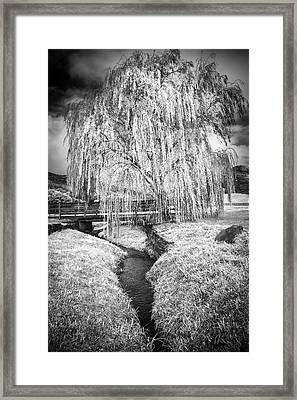 Icy Tree In The Meadow Black And White Framed Print